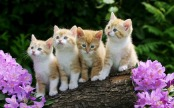 cute-baby-cats-and-dogs-wallpaper-2