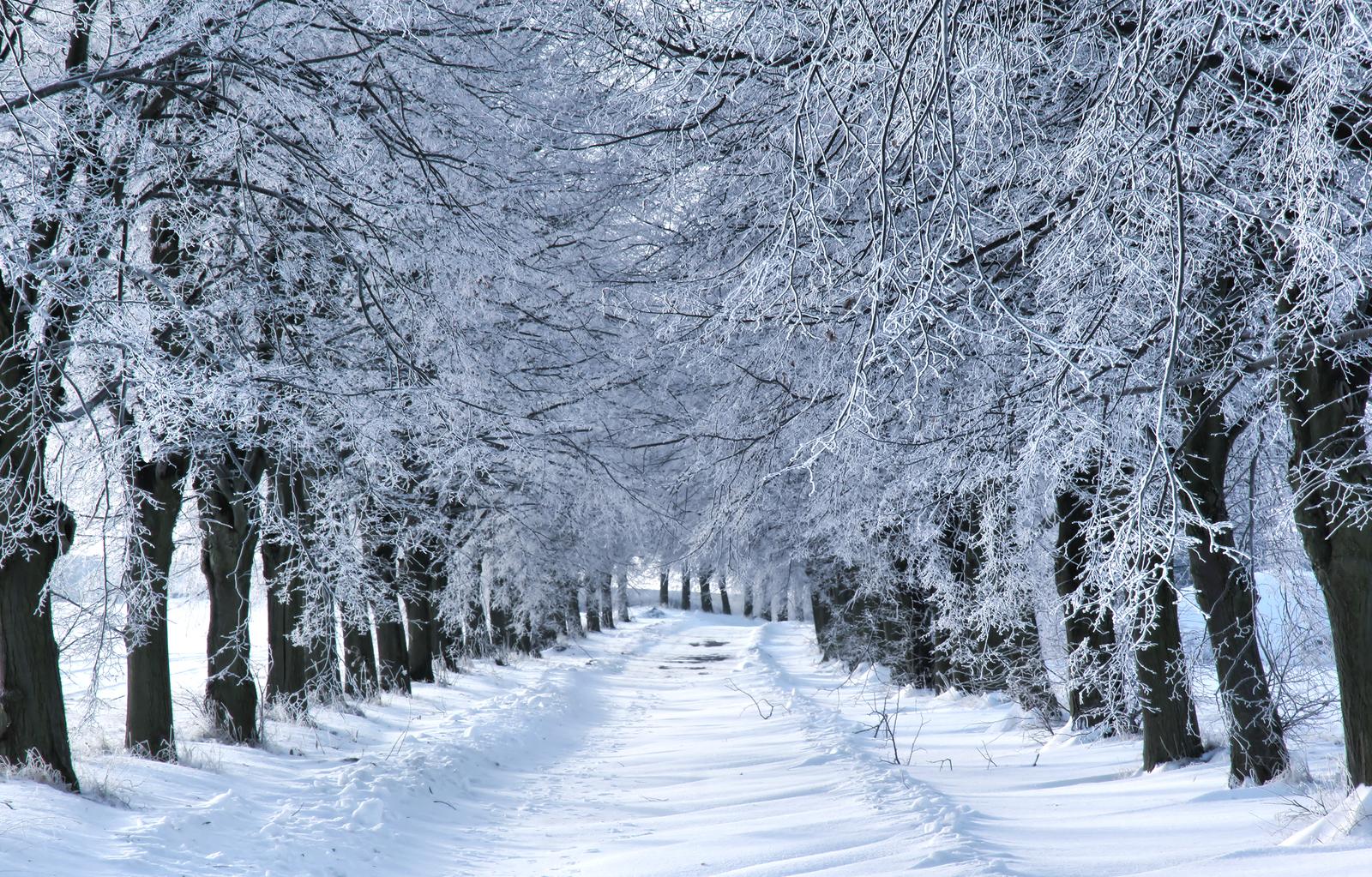 Winter Wonderland The Pawprint